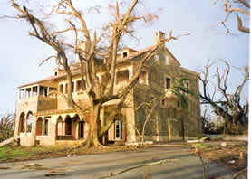 The Deering Estate black olive was heavily damaged during Hurricane Andrew in 1990.