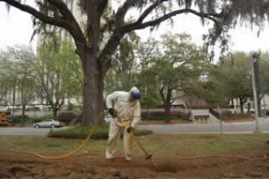 An Air Spade was used to locate roots to establish a tree protection zone around each tree.