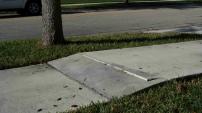Tree-Sidewalk Problems
