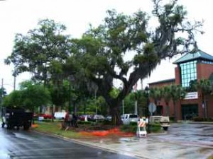 The live oak in front of the DeLand Police Office