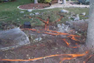 Tree and sidewalk conflicts | Lippi Consulting Arborists