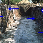 Figure 2 The root barrier is hidden in the soil on the right side of the trench. Notice how the roots are growing lower on the trench wall. Then notice how the roots have again grown upward on the left side of the trench farther from the barrier. (Photo from Ed Gilman, University of Florida website http:// hort.ifas.ufl.edu/woody/rootgrowthbarriers.html downloaded May 25, 2009)