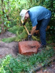 Here Danny is using a shovel to shave off the circling, matted roots on the side of the rootball