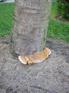 Trees0010